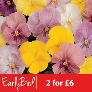 Pansy F1 Silhouette Mixed Multi-Pack