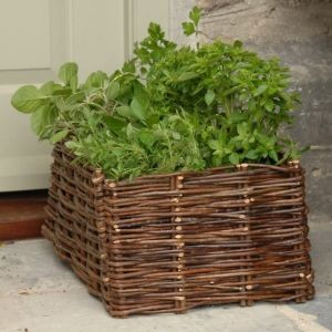 Burgon & Ball Herb Planter - Natural Willow