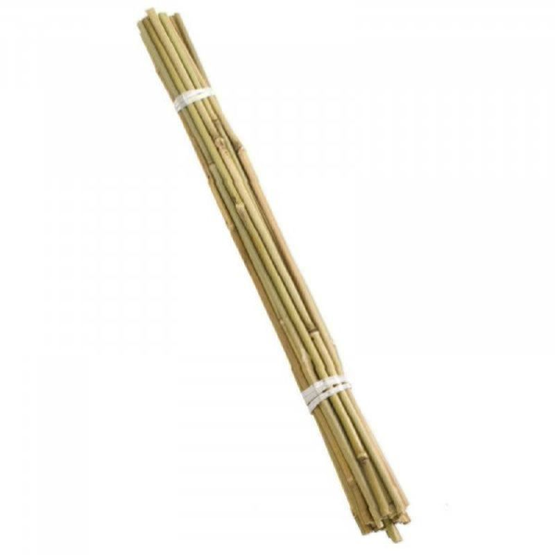 Smart 240Cm Bamboo Canes Extra Thick (Bundle Of 10)