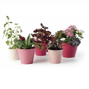 Burgon & Ball Sophie Conran - Indoor Ombre Pots - Raspberry - 5 Mixed Sizes