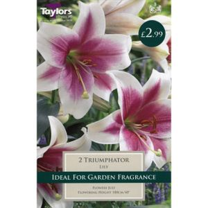 Taylors Lily Triumphator