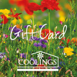 Coolings Voucher Summer Fields