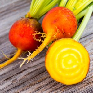 Beetroot 'Golden' Multi-Pack