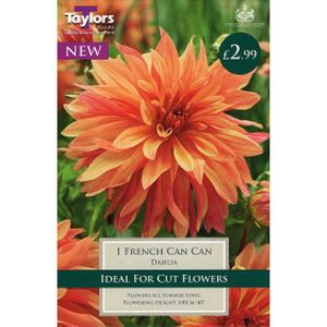 Taylors Dahlia French Can-Can
