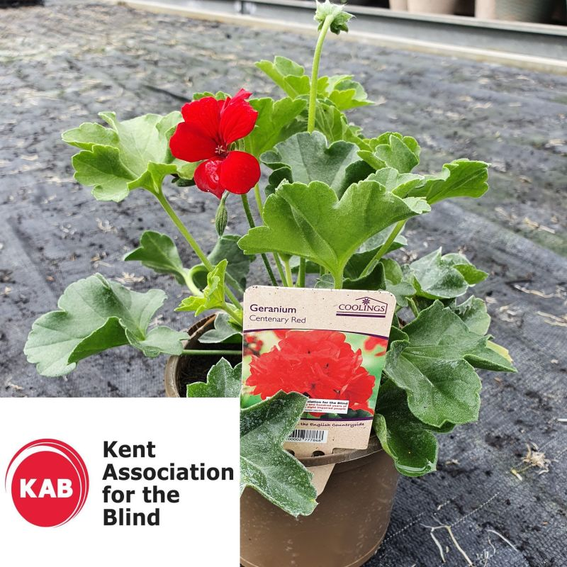Charity Donation Geranium 'Centenary Red' 1L