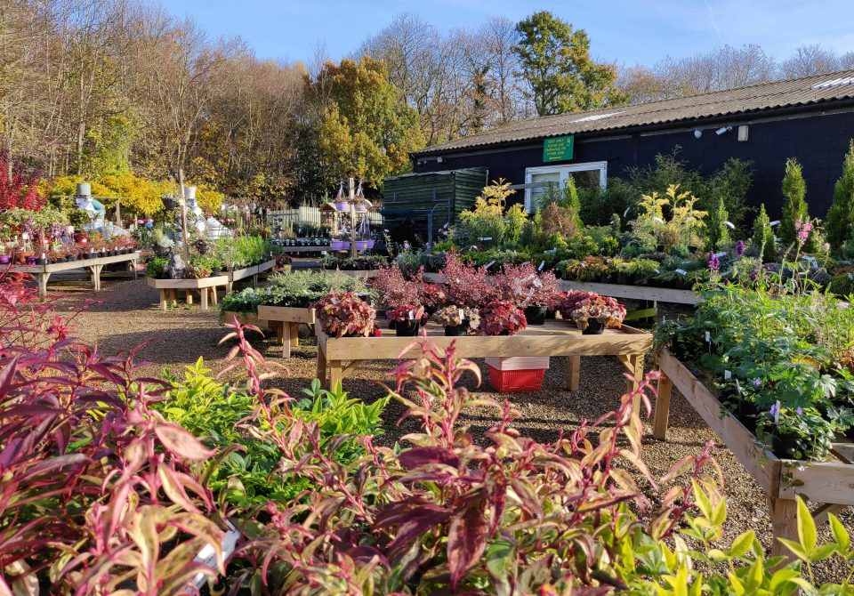 Coolings Potted Garden Nursery
