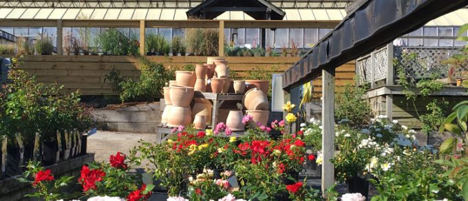 Featured image for 'Coolings Wych Cross Garden Centre'