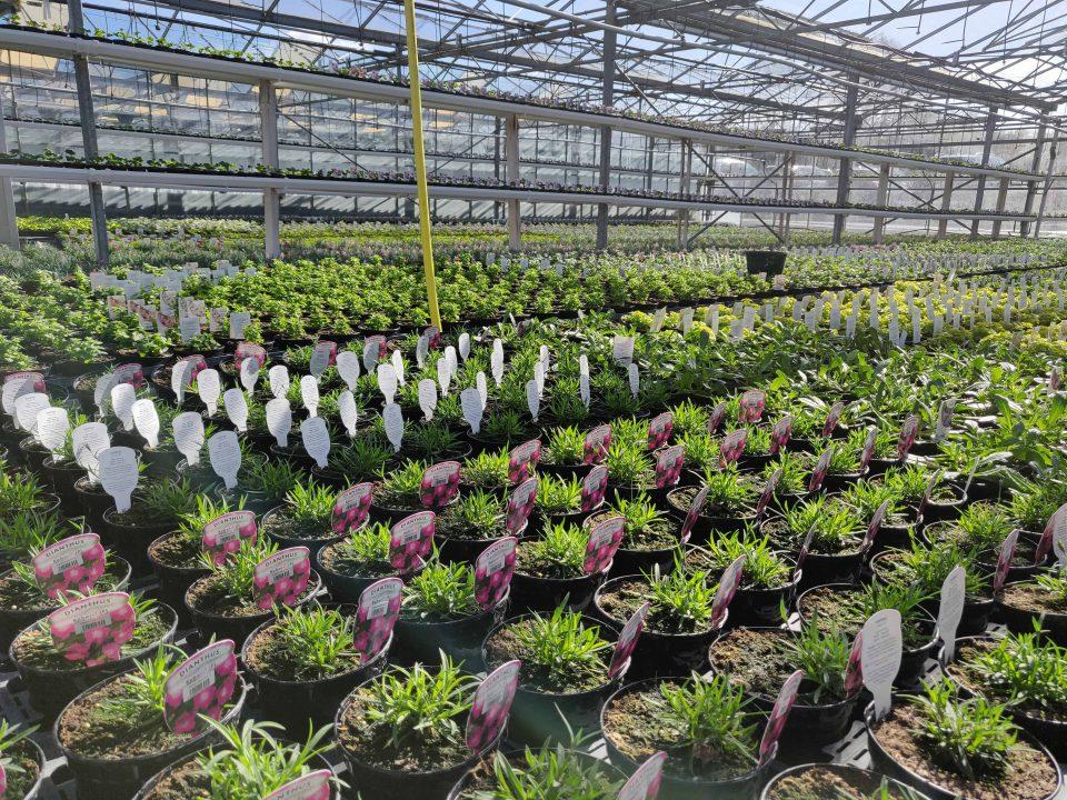 Our nursery team produce over 1 million plants each year on our on-site nursery