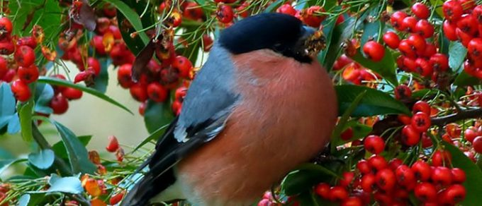 Featured image for 'Grow Your Own Bird Feed'