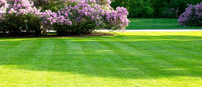 Featured image for 'Ship Shape, Moss Free Lawn…'