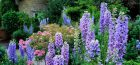 What to do in the Garden: July