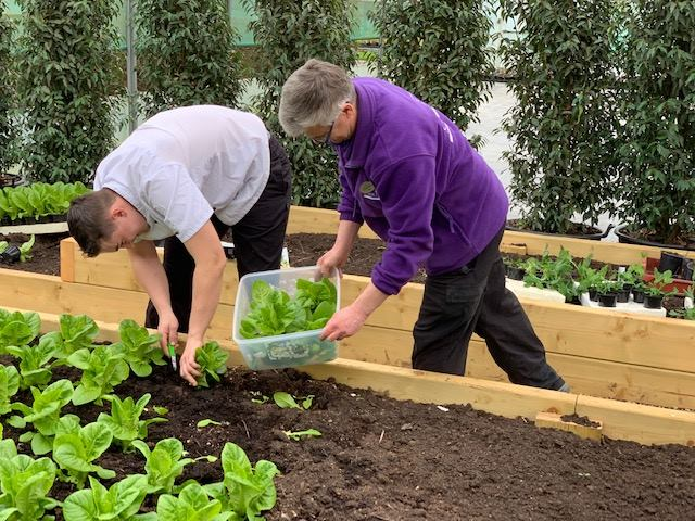Head Chef at Arthurs, Tom Williams, and Bedding and Operations Director, Ian Hazon, picking the first harvest from our Plot to Plate allotment.