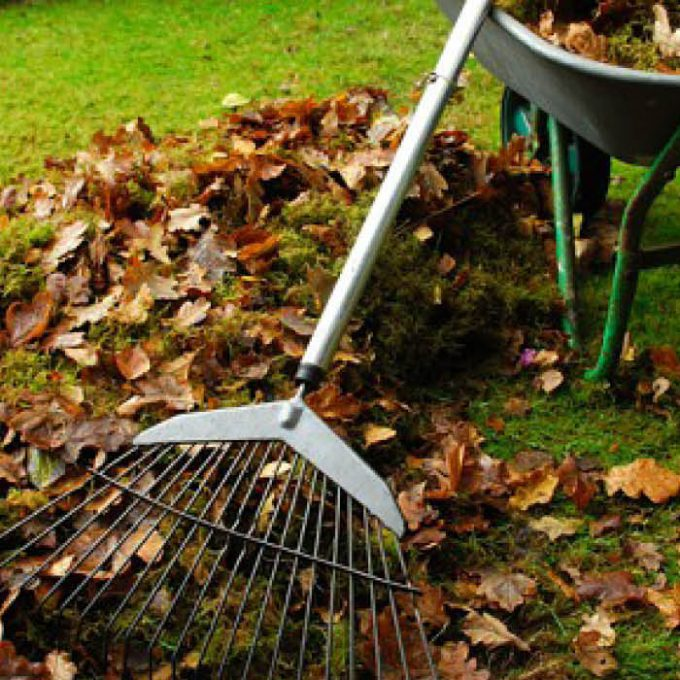 Rake lawns up to ensure air and light can reach the lawn surface
