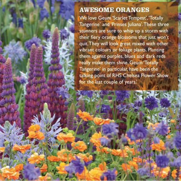Orange geums mixed with blue aquilegias, pale blue camassia, and Lupin 'Masterpiece'