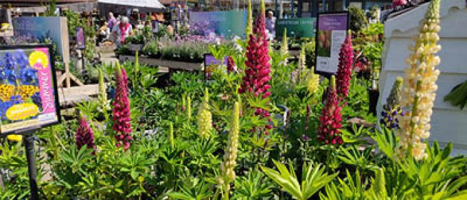 Featured image for 'Inspirational Summer Planting from Coolings'