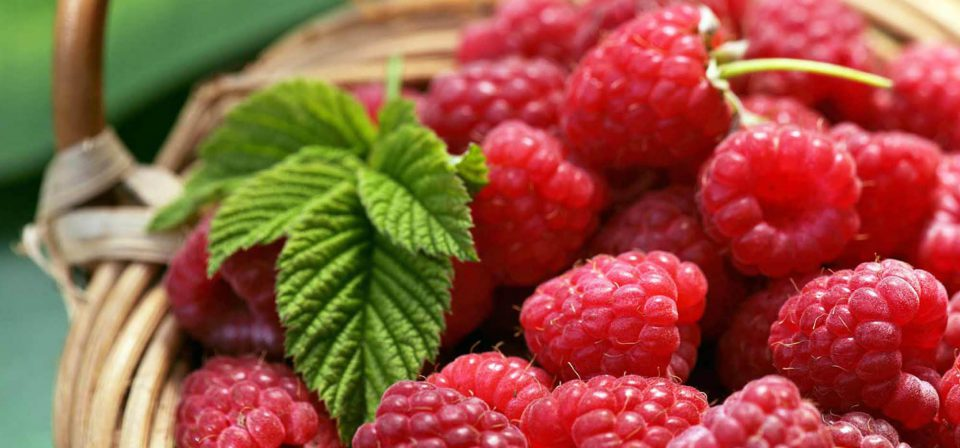 Raspberry 'Tulameen'