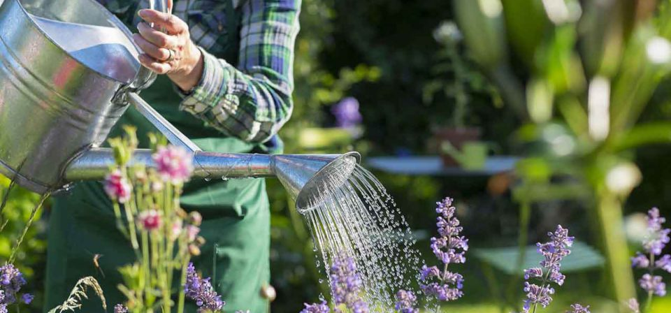 Healthy and colourful gardens can improve our moods