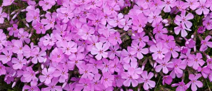 Featured image for 'Colourful Ground Cover'