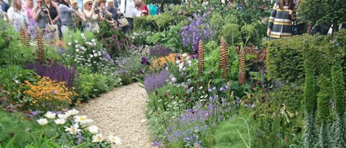 Featured image for 'Coolings medal winners at RHS Hampton Court Flower Show'