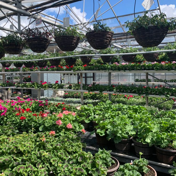 Our colourful baskets and bedding are ready for the Summer months