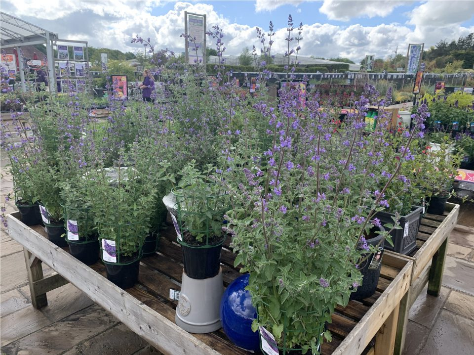 Herbaceous display at Coolings The Gardener's Garden Centre