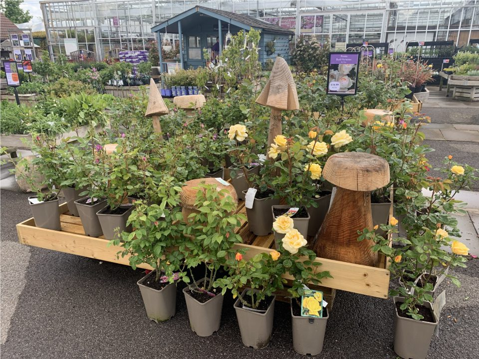 Display at Coolings The Gardener's Garden Centre with Rosa 'Arthur Bell'