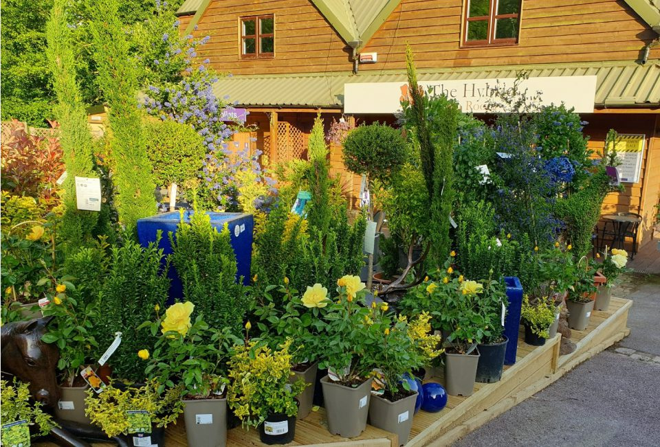 Plant display at Coolings Wych Cross Garden Centre