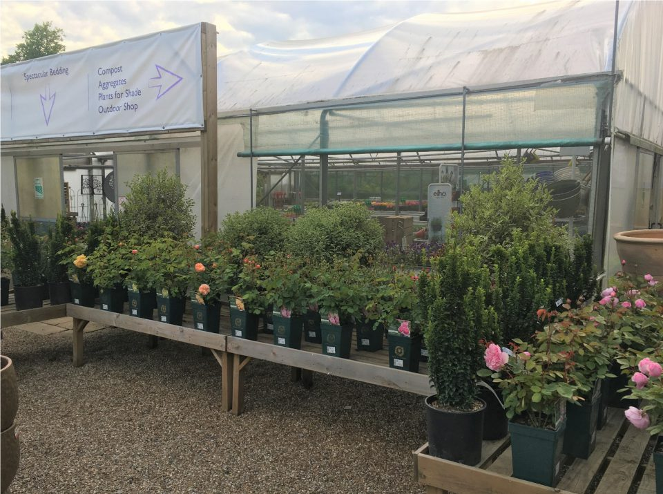 Rose display at Coolings Potted Garden Nursery