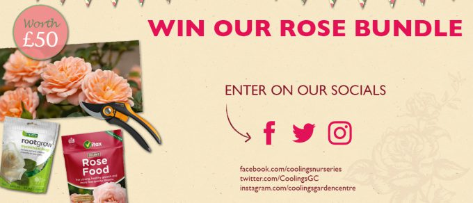 Featured image for 'Rose Festival Competition – Terms and Conditions'