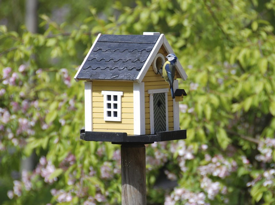 Bird houses and feeders can attract birds and keep them well fed