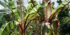Create a Tropical Paradise