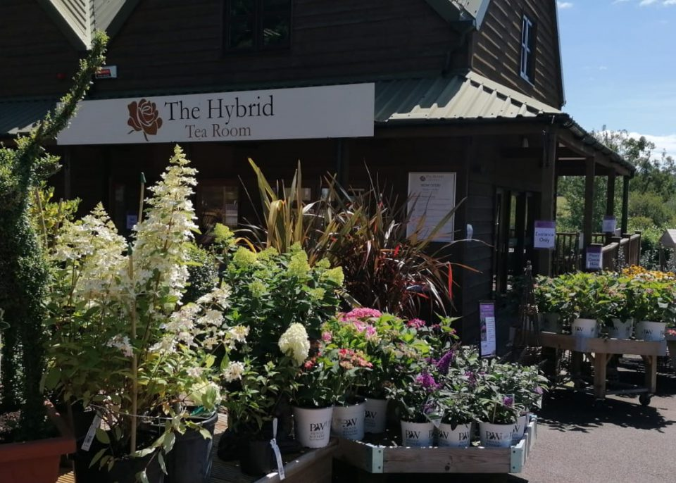 Hybrid Tea Room at Coolings Wych Cross Garden Centre