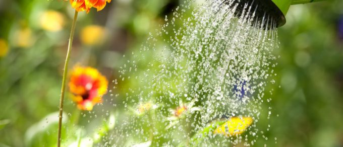 Featured image for 'Wise Watering!'