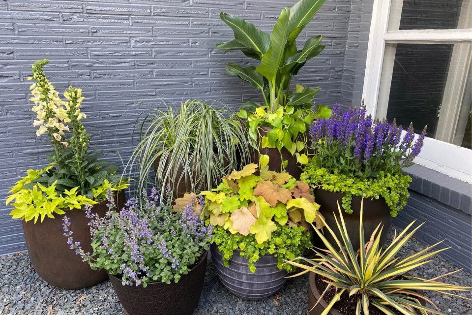 Check at the base of plants to see if the soil is dry or moist
