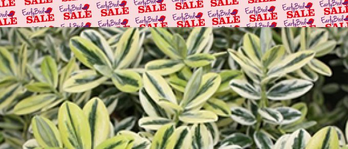 Featured image for 'Plant Shrubs Now, Enjoy Forever!'
