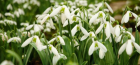 What to do in the Garden: February