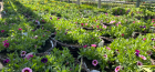 Grow With Us – Planting Baskets and Containers