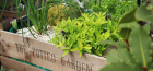 Grow With Us – Herb Planters