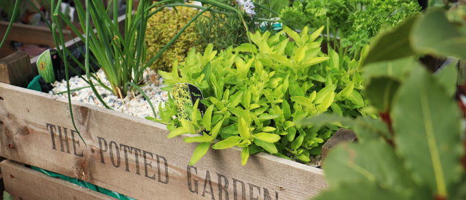 Featured image for 'Grow With Us – Herb Planters'