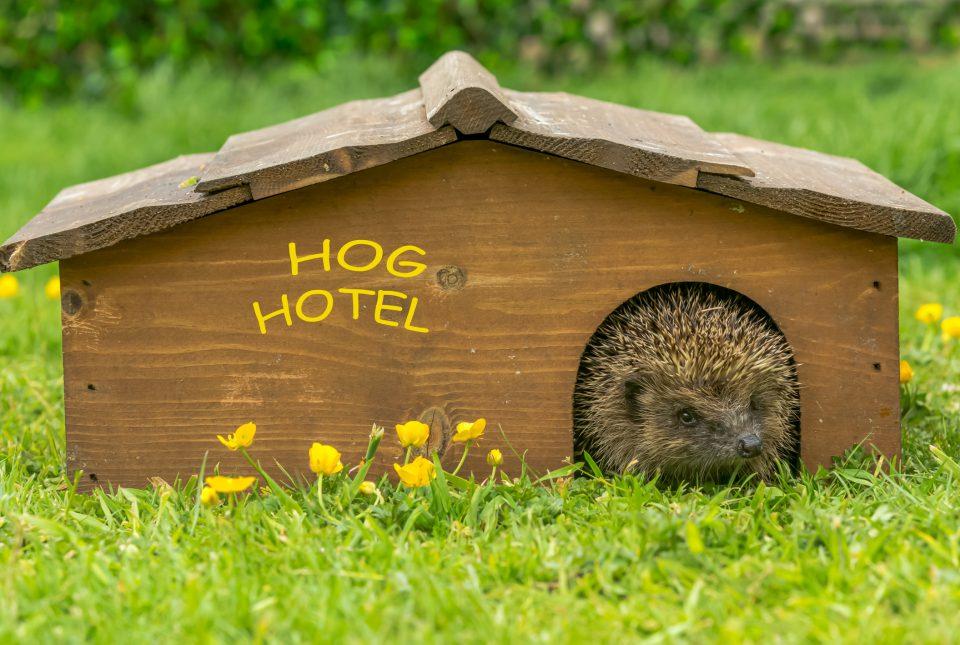 Provide a safe home for wildlife