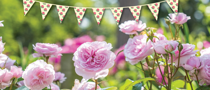 Featured image for 'Coolings Rose Festival'
