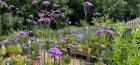 Grow With Us – Herbaceous Plants Loved by Wildlife