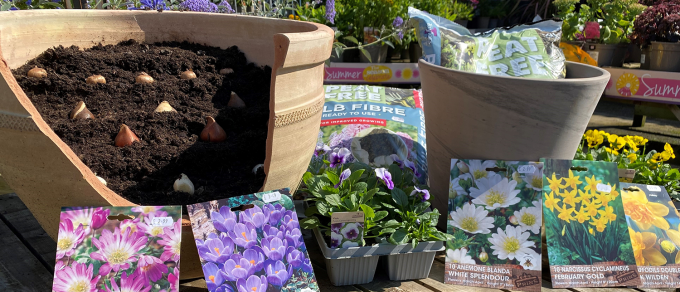 Featured image for 'Grow With Us – How to Plant a Bulb Lasagne Pot'